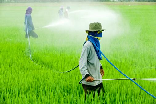 Intolérance au gluten : Monsanto serait responsable