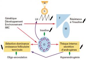 hyperprolactinemie