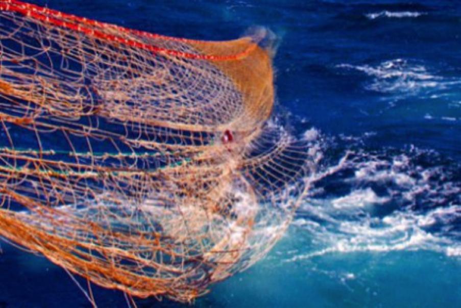 Bloom se paye à nouveau les pêcheurs d'Intermarché