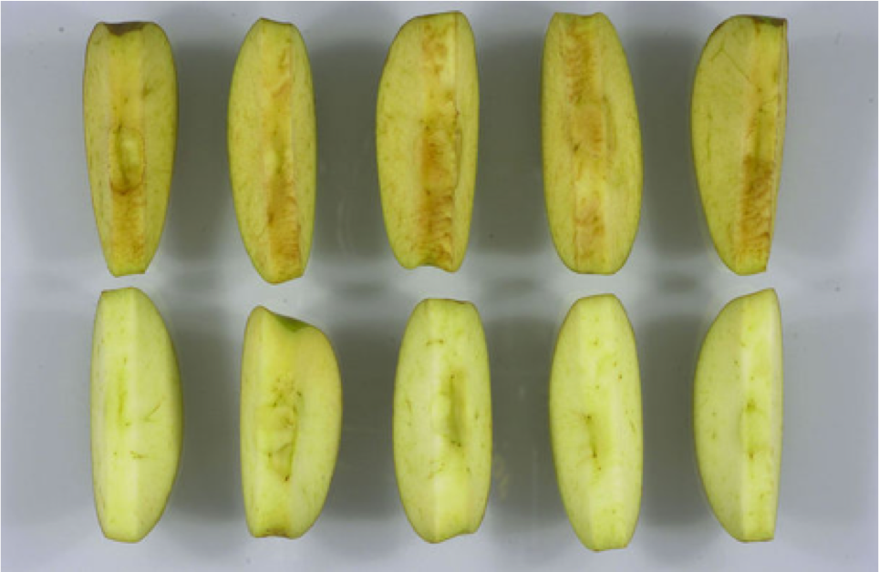 Qui veut manger une pomme OGM ?