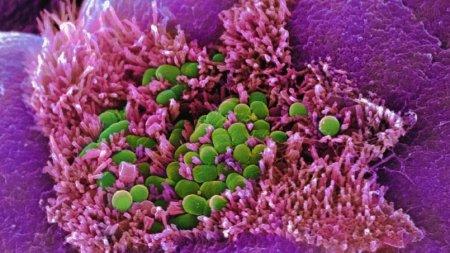 Nos bactéries, ces empreintes qui nous collent à la peau