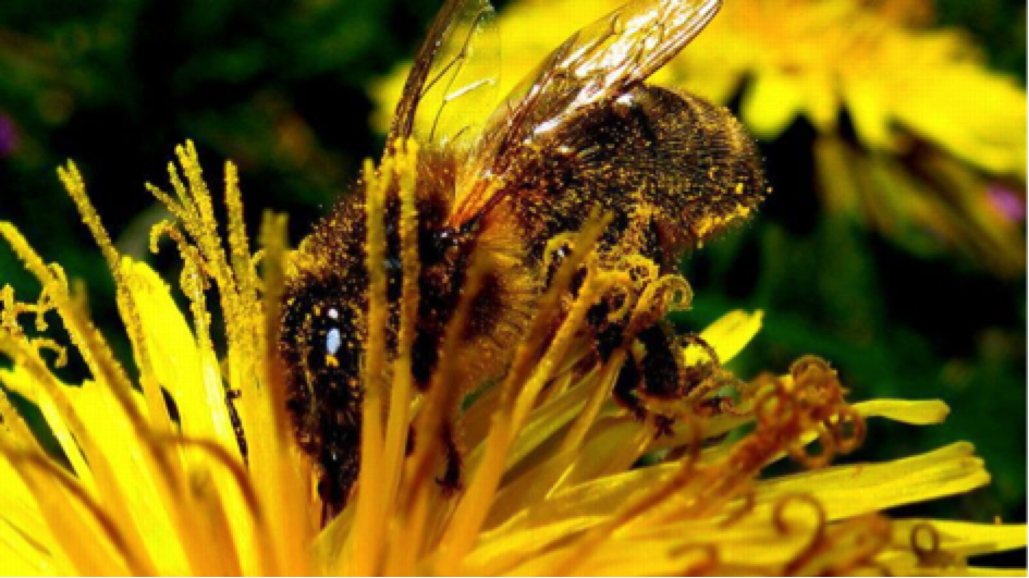 L'Assemblée vote l'interdiction de pesticides toxiques pour les abeilles
