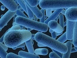 Des bactéries programmées pour détecter des maladies