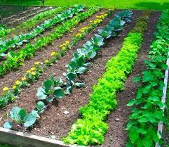 Comment les jardins soignent notre psychisme