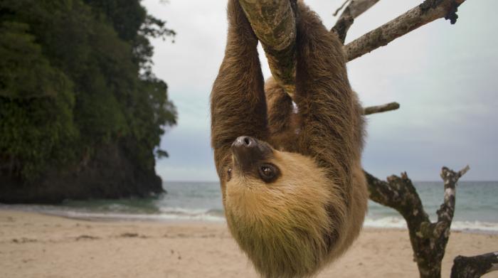 Le Costa Rica va fermer tous ses zoos et libérer tous les animaux en captivité
