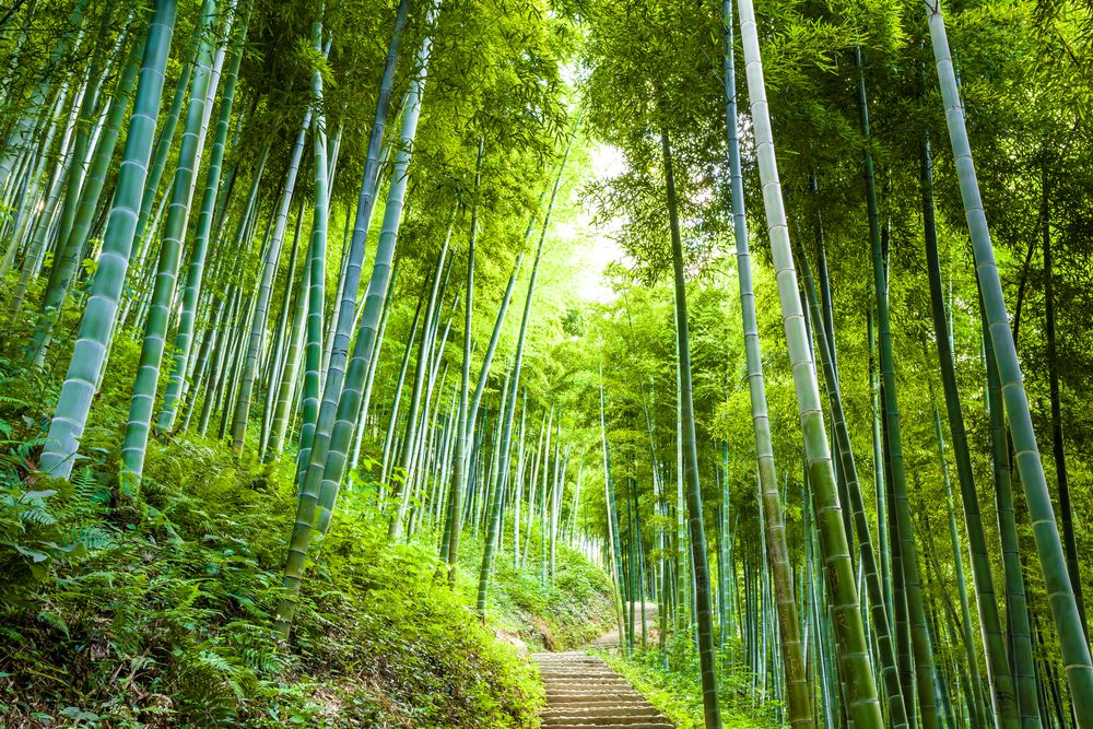 La déforestation de la planète marque – un peu – le pas