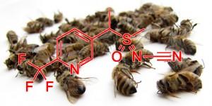 L'Europe autorise un nouveau pesticide toxique pour les abeilles