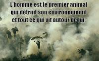 La terre subit de cause humaine sa 6ème extinction animale de masse, les hommes sont les prochains sur la liste