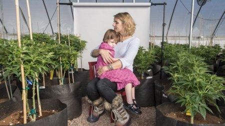« Cannabis et épilepsie, l'espoir à petits pas »