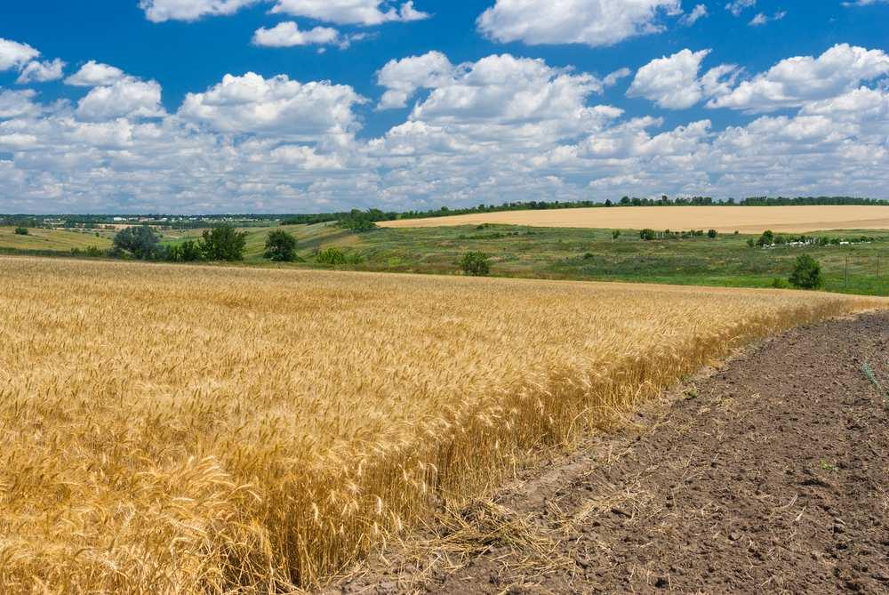 La fertilité des sols part en poussière