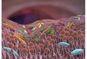 Un-lien-entre-fatigue-chronique-et-bacteries-intestinales_exact441x300