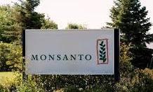 Comment Monsanto triche