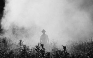 Le Parkinson est de plus en plus en lien avec les pesticides