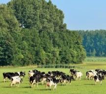 Les nanoparticules de Dioxyde de Titane E 171. Elles tuent les vaches et pourquoi pas vous ?