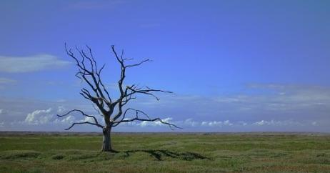 """Changement climatique : """"On est en train de perdre la bataille"""""""