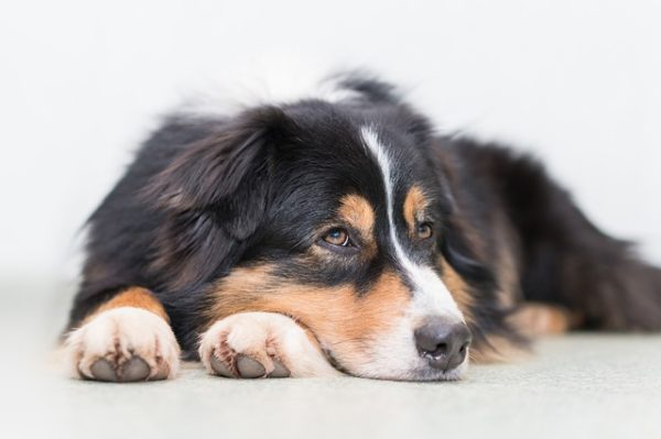 Mon chien, mon remède