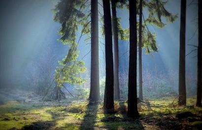 Se balader en forêt est bon pour notre santé