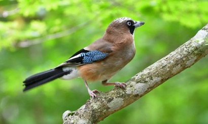 Un printemps silencieux, les oiseaux disparaissent à une vitesse «vertigineuse» « proche de la catastrophe écologique »