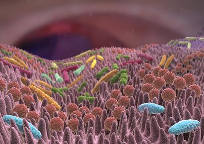Le microbiote dans l'utérus et le placenta
