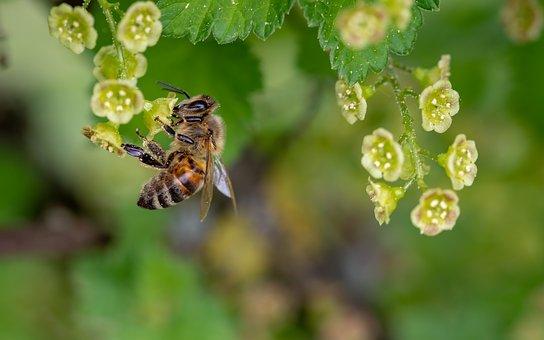 """L'Europe dit non aux néonicotinoïdes """"tueurs d'abeilles»"""