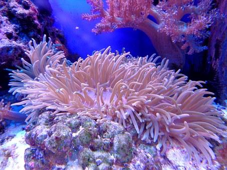 La grande barrière de corail, elle a déjà survécu à 6 extinctions