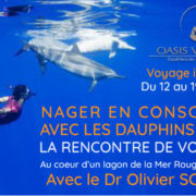 Dauphins Oasis Voyage. Mer rouge Mai 2018