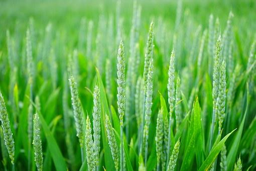 La loi Biodiversité reconnait le droit d'échanger les semences