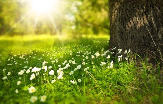 TOC, le soleil lutte contre les troubles obsessionnels compulsifs