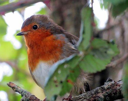 Biodiversité : inquiétude en France face à la raréfaction des espèces