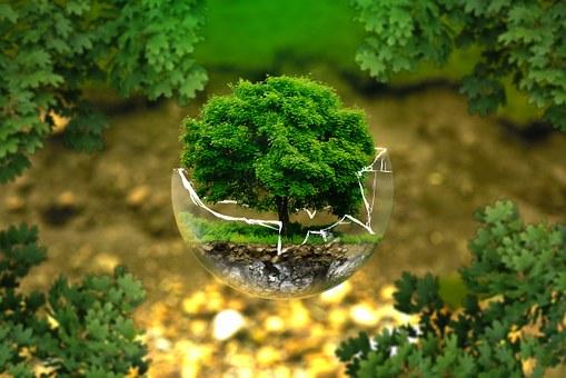 Les réactions de 10 ONG écologiques suite à la démission de Nicolas Hulot