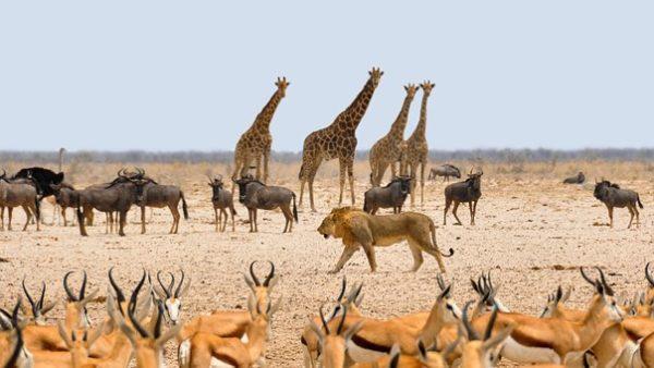 Rapport du WWF sur la biodiversité : disparition massive des espèces