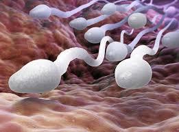 Baisse de la qualité et de la concentration du sperme humain