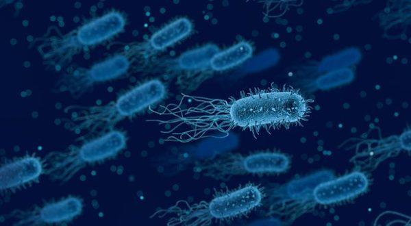 33000 morts en Europe dues aux bactéries multi-résistantes