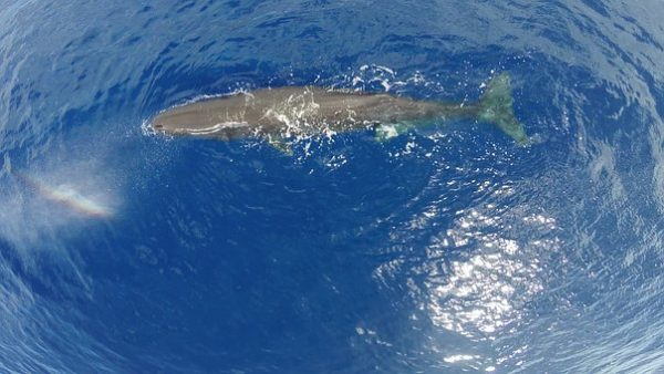 Un cachalot s'échoue en Indonésie après avoir ingurgité 6 kilos de plastique