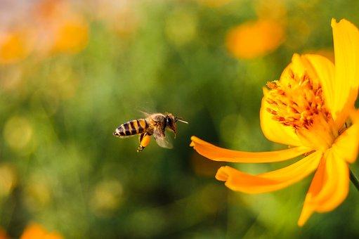 Allemagne : une pétition pour la sauvegarde des abeilles qui engendre un référendum