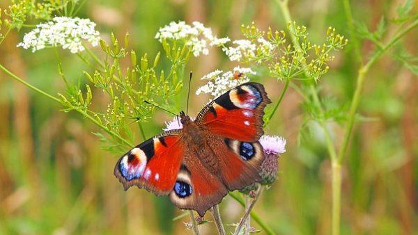 Il faut restructurer l'agriculture ou les insectes vont disparaitre
