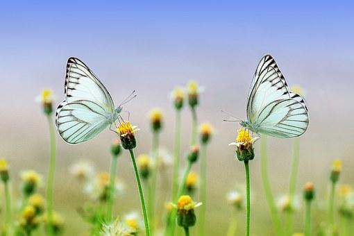 Disparition des insectes, 80% en 20 ans