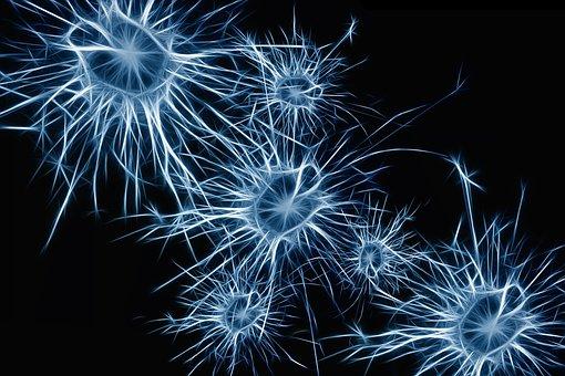 Le cerveau fabrique des neurones jusqu'à plus de 90 ans