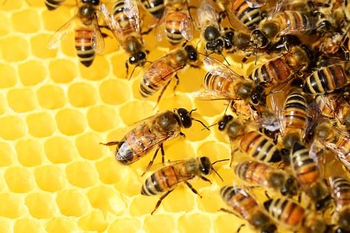 Les effets bénéfiques du bio sur les abeilles