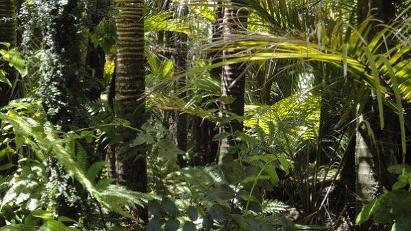 Pour Yann Arthus-Bertrand : Le combat contre le changement climatique est perdu