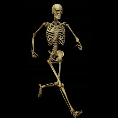 C'est l'os et son hormone l'ostéocalcine, qui permet de lutter contre le stress et non l'Adrénaline