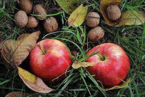 Les pommes sont remplies de bactéries