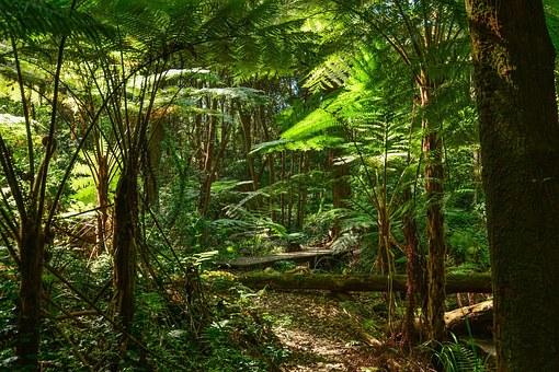 Les forêts tropicales : réserve de carbone six fois plus importantes qu'imaginé