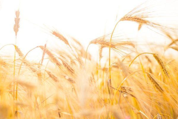 Le gouvernement crée une cellule pour lutter contre les opposants à l'agro industrie