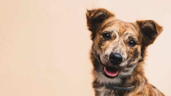 Un chien contre la schizophrénie