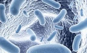 Notre mode de vie appauvrit notre microbiote