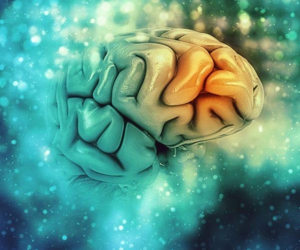 Le lien Herpès maladie d'Alzheimer