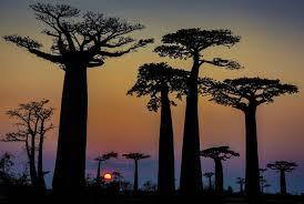 Madagascar : quand France info se ridiculise et désinforme …